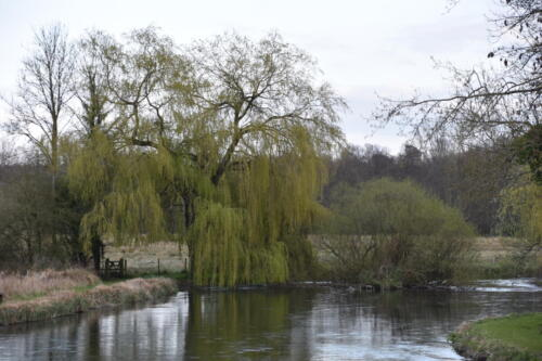 Harveys Meadow Walk
